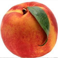 Six fresh cuttings of Elberta peach tree , 6+ inches long, Scion for grafting
