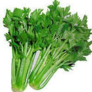 Celery- Tall Utah- 200 Seeds -