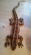 Eidechse aus Parasitenholz Tier Echse Holz Parasit16