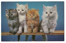 FOUR FLUFFY KITTENS On a LEDGE Vintage Postcard Cat White, Black, Gray Orange