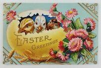Postcard Easter Greetings Chicks Busting out of Egg Flowers 1912