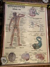 Vintage Medical Pull Down Chart Hindu English Nervous System Poster Art