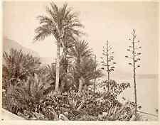 Monaco, Monte Carlo. Les Palmiers, ca. 1880  vintage albumen print. Tirage alb