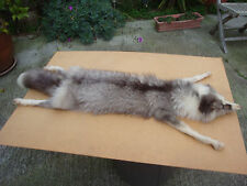 "Vintage Real Fox / Wolf Fur Neck Wrap/Stole/Collar 47"" Long Glass Eyes"