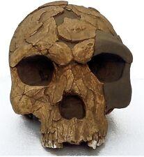 MOULAGE FOSSILE crane HOMO SAPIENS IDALTU fossil HERTO skull reproduction
