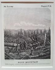 ADIRONDACKS - Blue Mountain - Timber cutting Original Print 1874 New York State