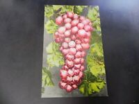 Flaming Tokay Grapes Vintage Fruit 1910s Mitchell Original Postcard California