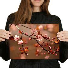 A4 - Cherry Blossom Tree Sakura Japan Poster 29.7X21cm280gsm #14126