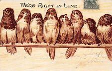 We'Re Right In Line~Birds Sitting On A Wire~Comic Postcard 1905
