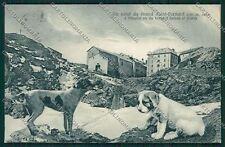 Aosta Gran San Bernardo Cane cartolina QQ5871