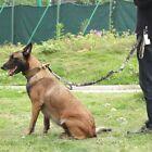 4.5FT Pet Dog Leash Nylon Durable Comfortable for Large Dogs Walking Training