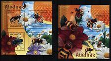 Mosambik Mozambique 2013 - Bienen - Honigbiene - Hummeln - Bees Abeilles Bombus