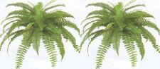 """2 BOSTON FERN 38"""" SPREAD X 48 SILK LEAF BUSH PLANT ARTIFICIAL FLOWER FLORAL SAGO"""