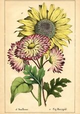 Postcard: Vintage Botanical Print Repro - Sunflower & Fig Marigold