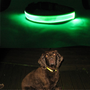 Hi Visibility Dog Collar Hi Viz Yellow Reflective strip with or without LED
