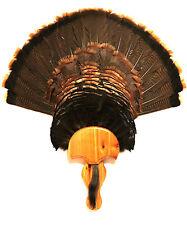 Western Cedar Turkey Fan Plaque Mounting Kit (Model: The Gobbler) Turkey Mount