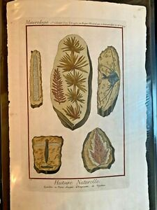1751 DIDEROT Antique Folio Hand Colored Engraving Fossils Minerals #10