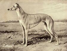 1930s Antique Greyhound Dog Print Ward Binks Art Champion Lattoson 3406-E