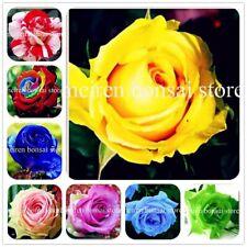 200 pcs Rare Holland Rainbow Colourful Rose Flower Seeds