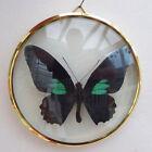 diamantpolierter Messingrahmen 100mm Durchmesser mit Papilio sesostris M
