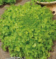 Salad Seeds Green Coral Vegetable Seed