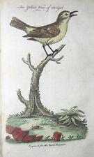 1761 ROYAL MAGAZINE AMERICAN COLONIES NY SC GA NC MA VA FRENCH INDIAN WAR BIRDS.