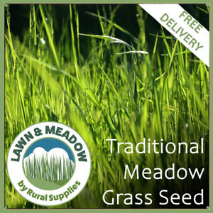 Traditional Meadow Grass Seed - ENVIRONMENTAL GRASS MIXTURE