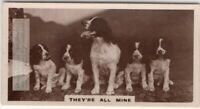 Spaniel Mother Dog and Her Litter Of 4 Puppies 1930s Trade Ad Card