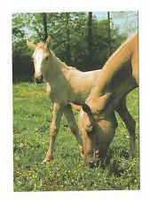 Pferdepostkarte Ak Pferd Palominostute mit Fohlen Praha  Sehr guter Zustand