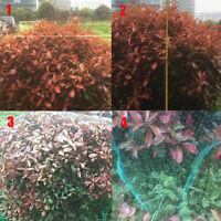Anti Bird Protect Tree Net Fruit Crop Plant Garden Pond Netting Mesh SS3