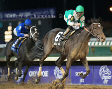 Royal Delta 2011 Breeders' Cup Ladies Classic #1  8x10 Photo