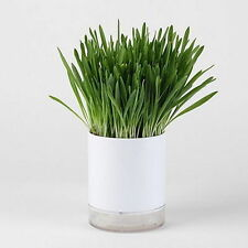 Wheat Seed Cat Grass Growing Complete Kit Healthy Pot