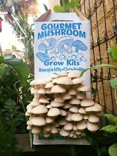 White Oyster Mushroom Kit, Easiest Kit On The Market, Grow Oyster Mushrooms