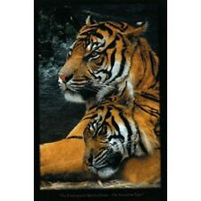 "MAGNIFICENT SUMATRAN TIGERS 91 x 61 cm 36"" x 24"" WILD ANIMALS POSTER x"
