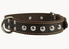 "Genuine Leather Dog Collar 15""-20"" neck Studded 1.25"" wide  Amstaff"