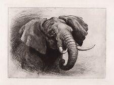 "Original Heywood HARDY 1800s Etching ""Head of an African Elephant"" Framed COA"