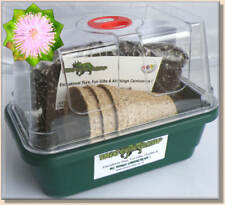 * MIMOSA PUDICA Seeds * DELUXE GROWING KIT * MOVING PLANT * Everything You Need