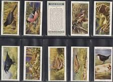 Full Set, Players, Wild Birds 1932