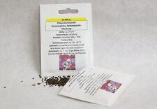 Sommerphlox Flammenblume Farbenpracht Phlox drummondii Samen Saatgut Qualität