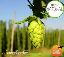 Hops * Humulus Seeds Plants Lupulus Bonsai Brew Your Own Beer Today 100pcs/pack