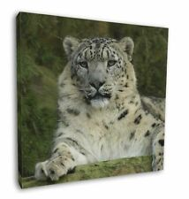 """Beautiful Snow Leopard 12""""x12"""" Wall Art Canvas Decor, Picture Print, AT-47-C12"""