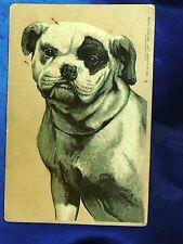 Vintage Tucks postcard Old English Bulldog Bully dog w patch over eye Sweet!*