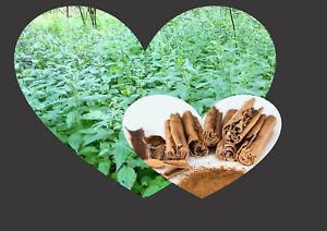 10 x NETTLE & cinnamon Teabags ORGANIC HERBAL inflammation health antioxidants