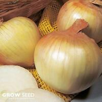 Senshyu Onion Seed - 300 Seeds SOW AUG - NOV Over Winter Onion Seed