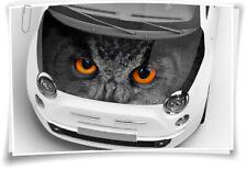 Eule Augen Motorhaube Auto-Aufkleber Steinschlag-Schutz-Folie Airbrush Tuning