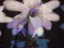 SELECTION BY ULLA POPKEN Tunika Longshirt Blumenprint  46 48 XXL