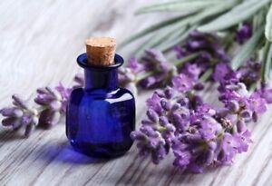 Seeds English Lavender Plant Lavandula Medicinal Herbs Planting Organic Ukraine