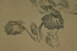 JAPANESE PAINTING AGED ART Hanging Scroll plant sprout 呉春 松村 Japan OLD INK a346