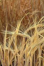Farm Photo Journals Notebooks Diaries: Farm Journal Barley Growing Field :...