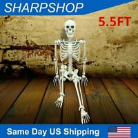 5.5FT Halloween Life Size Posable Skeleton Sound Activated LED Glowing Eyes New